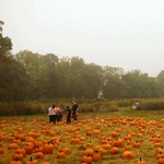 5 great itineraries for romantic autumnal dates in #nyc. Take your sweetheart! http://t.co/eAapTbm7Mr http://t.co/KvwgsjyUFp