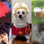 Here are a whole bunch of pets looking miserable in animal Halloween costumes. http://t.co/iU22X8U407 http://t.co/m0N2sdInkT