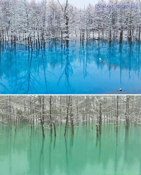 Blue Pond in Hokkaido Japan turns turquoise blue or emerald green, depending on the weather and amount of light. http://t.co/xteIK7wfaW