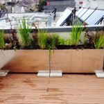 #PlymouthHour #roof #garden http://t.co/b5fd2ky8dT http://t.co/G6HQTgFSBc