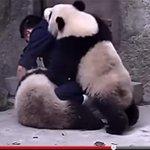 RT @livedoornews: 【悶絶】赤ちゃんパンダが風邪!全力の「お薬拒否」が可愛すぎる http://t.co/rSQB5nLHnn 一頭が薬を飲まされそうになると、それを阻止すべくもう一頭が果敢に出動。動画→https://t.co/LpY6FDWMYn http://t.co/Yvn1ztXiyE