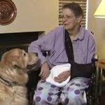 RT @ecuavisa: (VIDEO) Ángeles de cuatro patas: anciana sobrevivió a accidente gracias a sus perros http://t.co/eL2637ULU9 http://t.co/c09Rwhqcrc