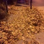 Autumn. http://t.co/hOjrcseixy