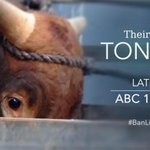 What we found in largest live export investigation in history = damning. Watch @Lateline 2NIGHT 10:30 #BanLiveExport http://t.co/I4zjxNmvny