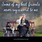 RT @BFRescue: Best Friends! #dogs #bfr #Love http://t.co/pH96tij1kI