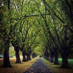 RT @cambsphoto: Avenue of the giants! Jesus Green, #Cambridge. #autumn #autumnleaves http://t.co/2vOJsViM24