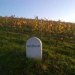 RT @BollingerUK: Bollinger vineyards in the autumn sunshine http://t.co/oTMy2wuFdd