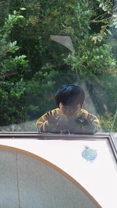 和歌山でトリックアート館に行ったけど、いちばんびびったのは、どんなトリックより、ただ窓に貼られた写実的なシールでした。意図がわかんないしなんなのマジこわい http://t.co/ZePSoUa9kP
