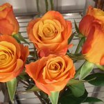 RT @fioriflorist: These are gorgeous and perfect for this time of year! #fioriflorist #Southend http://t.co/mErYSmTxEe