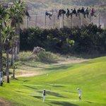 RT @MorenoG_Agustin: La foto de la obscenidad:Jugando al golf frente a inmigrantes encaramados en la valla de Melilla=pájaros @eldiarioes http://t.co/6he1dRgUyY