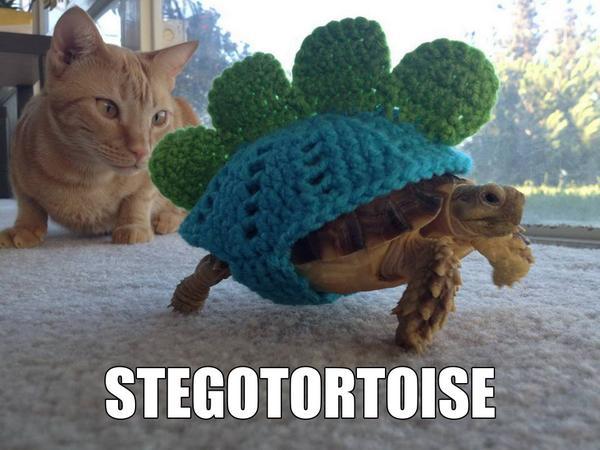 Stegotortoise! http://t.co/DVeo8t4LLz