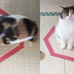 RT @karapaia: 【RT11700UP】 コードかテープがあればよい。驚くほど猫がホイホイする、猫転送装置の作り方がブレイク中 http://t.co/OFnXs3abf9 http://t.co/guQyJIrRzI