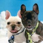 RT @NewsOK: Share your pet pics with us for a special @LOOKatOKC issue. Submit them here: http://t.co/micYIkeP4u #LICKatOKC http://t.co/yFujVIM5Wz