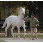 RT @JonathanPalmer: A rare white colt, son of Thunder Gulch, sold for 29K @FasigTiptonCo @gregoryahall http://t.co/9sv5hENhS3