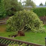 BC Storm: Rain, winds cause havoc overnight in Metro #Vancouver http://t.co/gdbChPxaZ1 http://t.co/Vc5ZBhi5TP