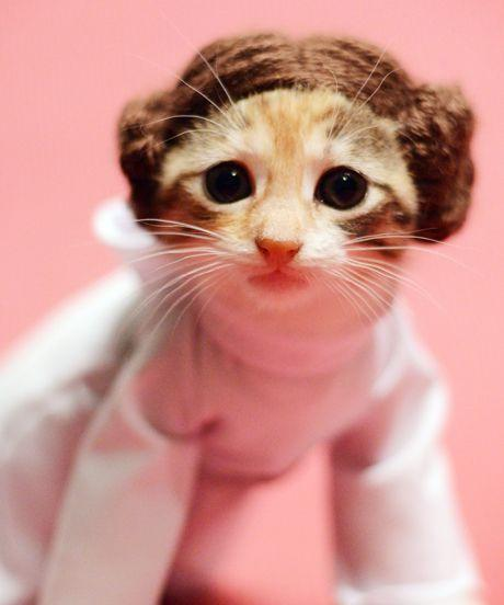 Princess Leia Kitty http://t.co/jHrcHJFlL4