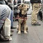 Mascotas podrán viajar en el transporte público #Rosario http://t.co/rZSTarvRMm @CarlosCossia http://t.co/VqqGavLoGQ