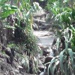 Verificación afectación de cultivos x avalancha ctoGuatapuri vdaSanjose. @PrensaVpar @CarlosCespdes @FredysSocarrasR http://t.co/62LoNqmsbx
