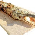 写真のインパクトに絶句。こんなのが日本に棲息しているとは。/激ウマ&激マズ。へんてこ生物、捕獲せよ! 笑って、喰らって、ためになる『外来魚のレシピ』 - HONZ http://t.co/AQk3ghI9Fd http://t.co/ERCgiQaqEw