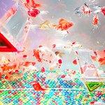 [明日から開催] アートアクアリウム城、京都・二条城で過去最大規模の開催 - 初の屋外展示 - http://t.co/hbAwnQKpzx http://t.co/3p78cB9IG6
