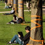 RT @UIPhoto: Students enjoy the sun on the Quad under trees decorated for #ILLINOIShomecoming @Illinois_Alma #ILLINOIS http://t.co/tqHmH2W5sj