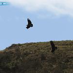 RT @elcomerciocom: #Ecuador / Quipo, el cóndor liberado, contará con un seguro » http://t.co/pMTtocZVxt http://t.co/aPoV1GDYQH