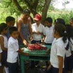 RT @lisandrorosales: Alumnos de la Esc Luis Landa en Campamento cosechan rabanos de su huerto escolar @JuanOrlandoH @DesarrolloHn http://t.co/7RCR7CyQOv