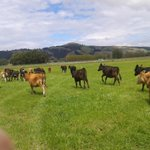 RT @GigaShon_: Even cows can benefit from GUFB! More efficient stock rotation/cultivation maybe? #gigatowndun http://t.co/jsS3Rt9NU6
