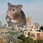 """Tiny hamster eating tiny burritos"" goes viral, but not in a good way #LameApocalypses @midnight http://t.co/ADu4d5sr5y"