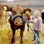 RT @HarrogateHound: VIDEO: Animal displays and demonstrations on offer at this years Countryside Live http://t.co/BzFqNKAEp0 #Harrogate http://t.co/1qeT25E0ud