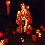 RT @mashable: 5,000 carved pumpkins twinkle at Rise of the Jack-o-Lanterns http://t.co/85c5gYvBOq http://t.co/pRBVY1tLRy