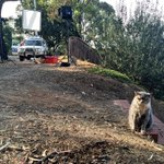 Someones not too happy were on their turf for tonights weather report. #EdenHills #grumpycat @9NewsAdel http://t.co/3aGb4JAl2A