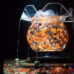 【明日から】夜の二条城で金魚が舞う「アートアクアリウム城」開催 http://t.co/KmR4TDbexn http://t.co/741vcYAPLM
