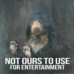 RT @peta: ICYMI: Bear BIT OFF arm of boy at zoo: http://t.co/hCtvKHHetO RT if u know bears belong in the WILD! #BoycottTheZoo http://t.co/DNkbLbu3Kd