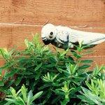 We have observers some unusual spiciest in this garden.. Very curious.. ???? @lizziebenn #garden #bristol http://t.co/0LXnI58T3B