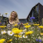 RT @PlymUni: Vote for Plymouth to be Blooming Marvellous and win the £120,000 #GrowWild campaign! http://t.co/nibcGC4HU9 http://t.co/3gkHrkT0jX