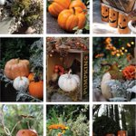 It is my personal belief that you can never have too many pumpkins in the garden. #Halloween http://t.co/0XGTGwE9Np http://t.co/zPSf9m6nof