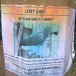 RT @Cheese_Diarist: This parrot has now been missing four weeks - #Nottingham / #Arnold / #Woodthorpe people, please RT! @Nottingham_Post http://t.co/ZnOBTo5tpr