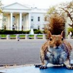 Electrifying the WH fence is an option - but would be unfair to area residents. http://t.co/90kU6LnUeM