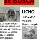 RT @eleniguz: @RegioSeguro #lalomas #garcianl #perrosperdidos #ayuda #AYUDAANIMALES #monterrey @LomasBosques @laslomas http://t.co/smfUgXv9Oj