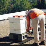 RT @TerrapinBeerCo: RT @UGABugDawgs: Our Bug Dawgs tended to our bee hives! Come to @TerrapinTours for #Octobeefest & learn about bees! http://t.co/TQggzpLvgM