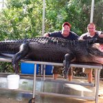 Monster gator named Lumpy caught in Florida (PHOTOS) http://t.co/PNx8irbdPa http://t.co/o9RYFaS94c