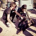 Ta małpa ma więcej szczęścia niż Polska! Tragiczna prawda! #Thanks1DPolandLovesYouToo #THANKYOU1DFORCONCERTINPOLAND http://t.co/NyHlQ35Eku