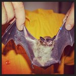#YGK Come see the Real Bat Man this Sun. Oct 26 at Little Cataraqui Creek CA at 2:00 p.m. crca.ca for details http://t.co/WAbs6es2cn