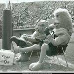 #TBT Bulldogs and Golden Eagles chillin #SMTTB #WeAreBulldogs #BlueOutTheRock http://t.co/cZVkG16JvH