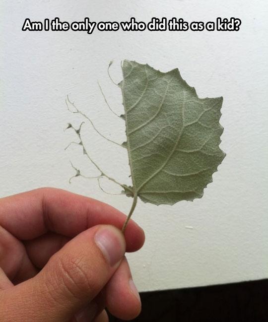 Am I the only one who did this as a kid? http://t.co/vfABbi2BRX