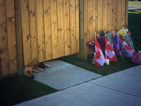 Heartbreaking image, Cpl. Nathan Cirillo's dogs #OttawaStrong http://t.co/EEdK5KL0Wc