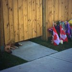 """""""@StuntmanStu: Heartbreaking image, Cpl. Nathan Cirillos dogs #OttawaStrong http://t.co/wpniInP95Y"""" ????"""