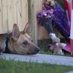 RT @HuffPostCanada: Fallen soldier Nathan Cirillos dogs await their masters return at familys Hamilton home http://t.co/EsKNfbRyUa http://t.co/E3EpSVqlGD