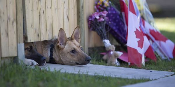 Fallen Canadian soldier's dogs wait for their master to return http://t.co/p1AYFjoSs5 http://t.co/MPzxVlYrjg